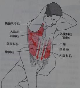 腹斜筋 作用