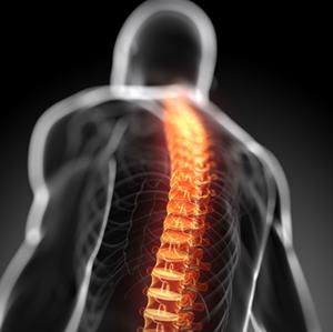 体幹 脊柱 安定